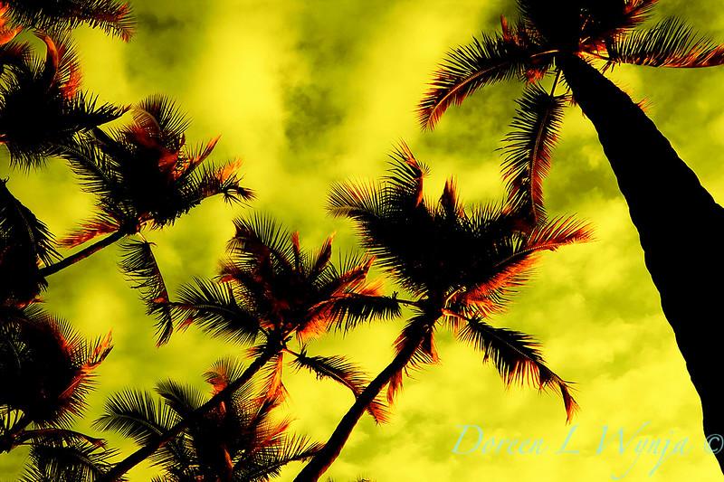 Hawaii_11-18-05_009_20x.jpg