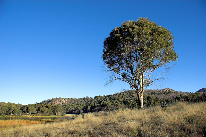 """A tree, by Lake Catani. (In fact, this is """"THE tree"""": the sole tree on the north side of the lake which appears in many photographs, simply because it is standing on its own. We photographers are lucky it survived the bushfires!)"""