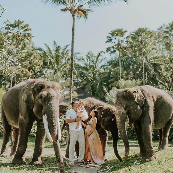 VTV_family_photoshoot_elephants_Bali_ (10).jpg