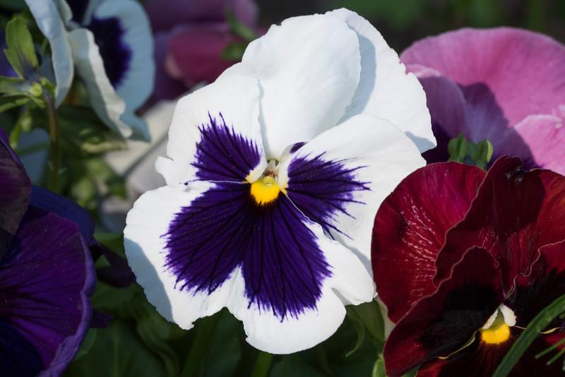 FlowersbyMacro-3849.jpg