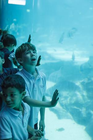 Kindergarten Aquarium Field Trip