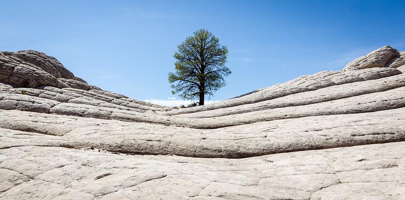 Lone Tree at White Pocket_John Hoffman.jpg