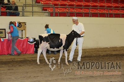National Holstein Show Hfrs 16