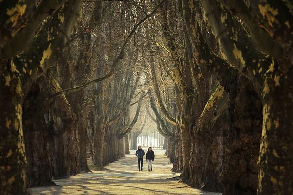 Avenue of Dreams...