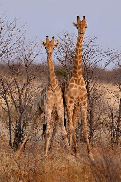 Namibia 69A7516.jpg