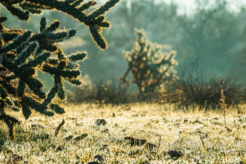 Rare dew on grass in the Sonoran Desert