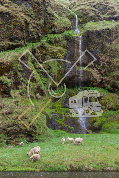 Icelandic landscape with sheep and waterfall