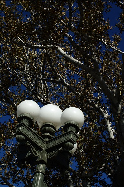 LaPlaza022-LightPostAndTrees-2006-09-27.jpg