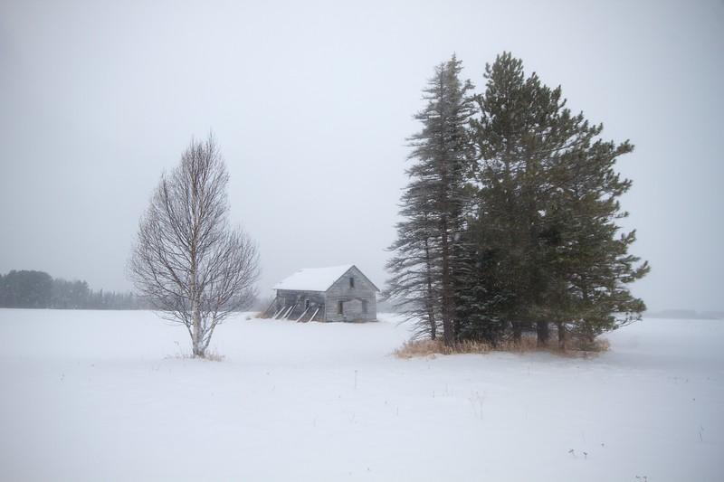 Farmstead Finnish barn Birch tree snow landscape CR5 Toivola MN Sax-Zim Bog IMG_9553.jpg