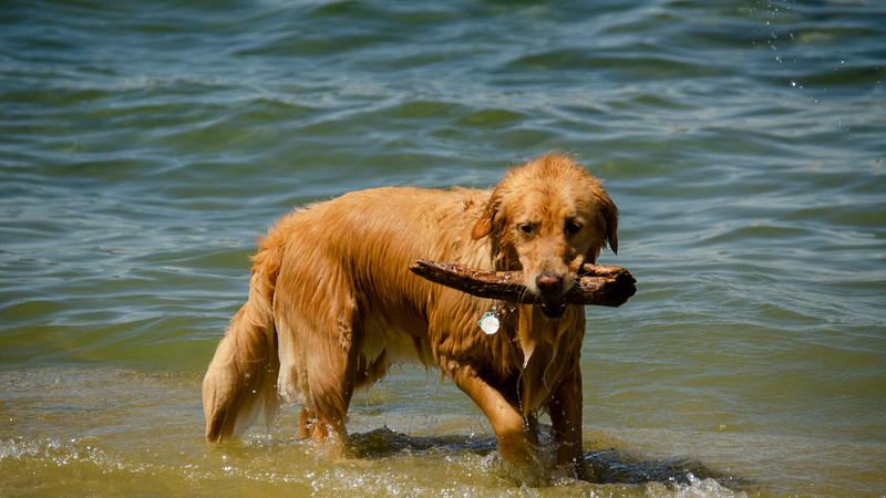 PuppyParty18-254.jpg