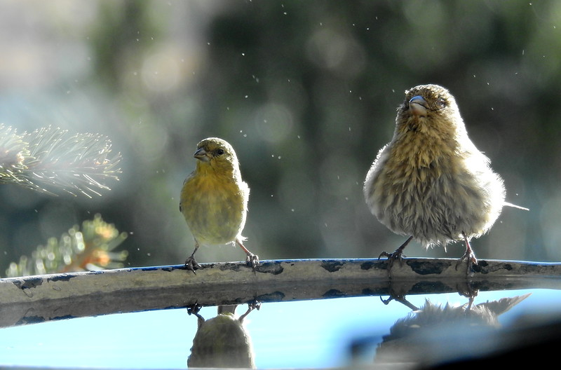 birds (216).JPG
