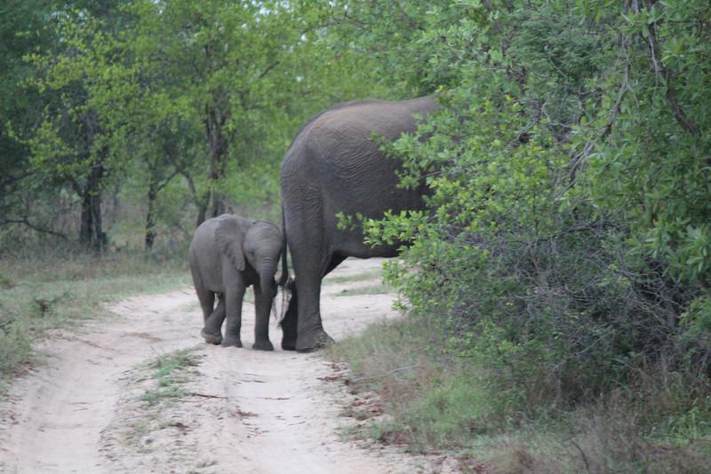 Africa Trip 2012 353.jpg