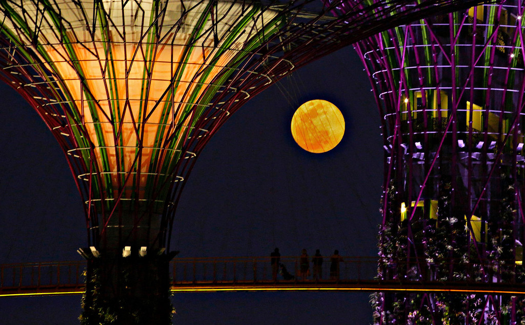 ". Tourists look at the rising ""super moon\"" from the elevated skywalk of the Supertrees Grove at the Gardens by the Bay in Singapore on June 23, 2013. The largest full moon of the year, called a \""super moon,\"" will light up the night sky this weekend.  REUTERS/Tim Chong"