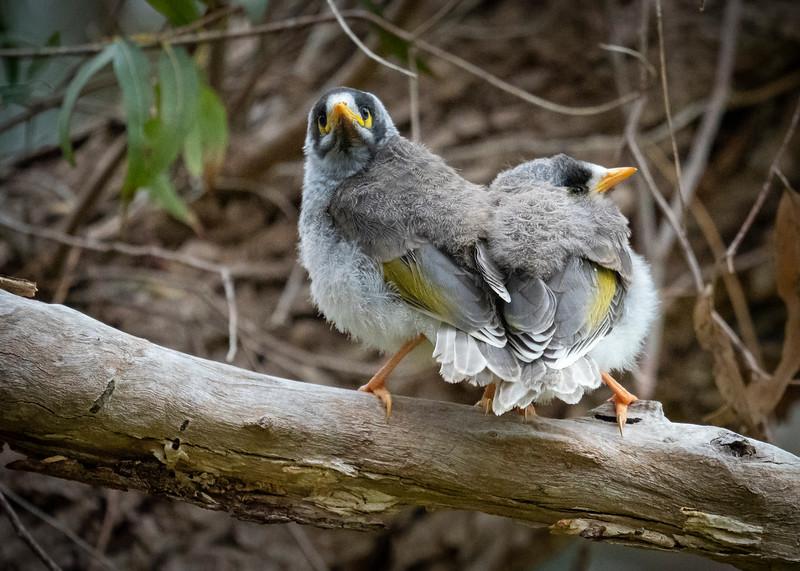 20181003_7473 R birds 2440  .JPG