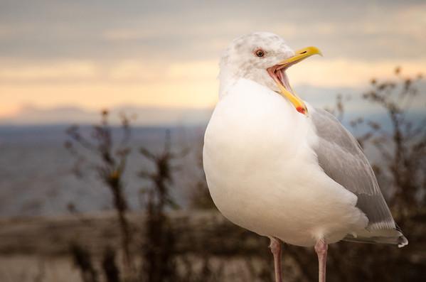 Birding and the Beach