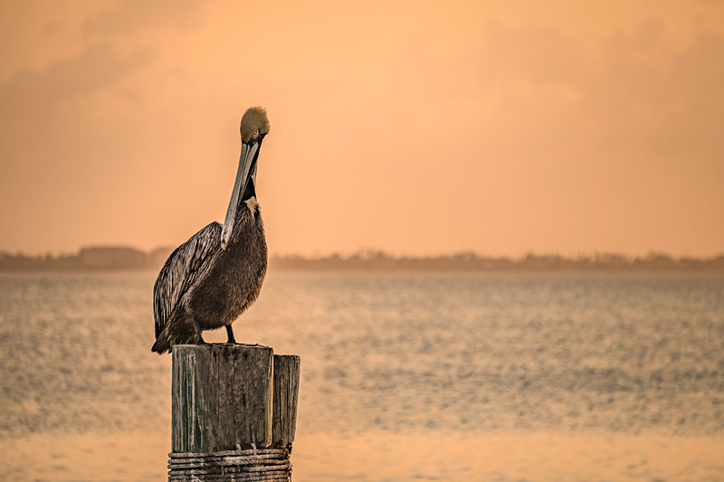 Pelican Sunset Semi-Sepia 2018.jpg