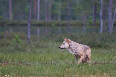 Finland - juli 2014
