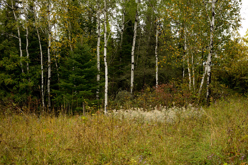 Lake of the Woods-13.jpg
