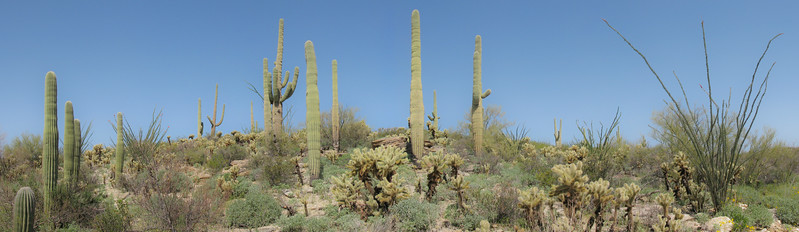 Saguaro National Forest
