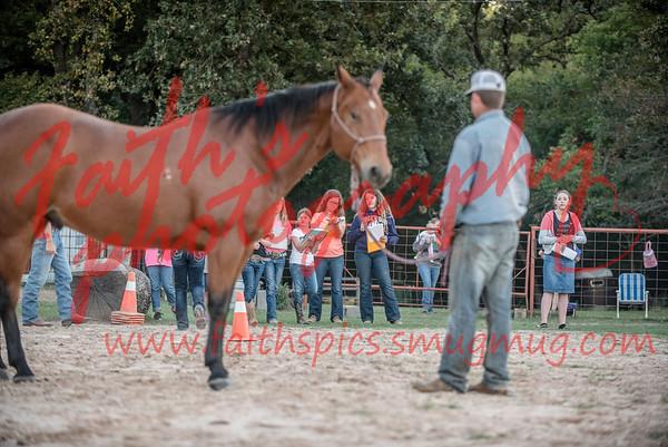 Horse Judging 2017-2018