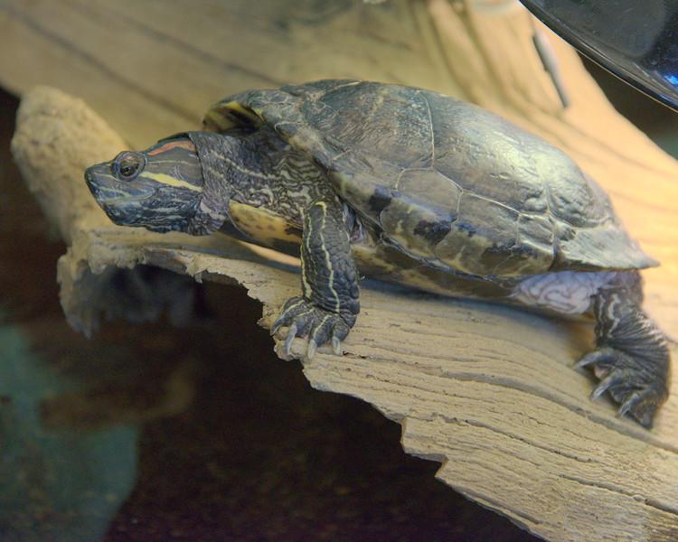 Turtle log.jpg