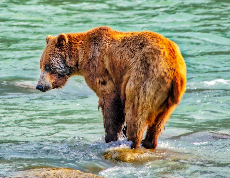 Bear feeding.jpg