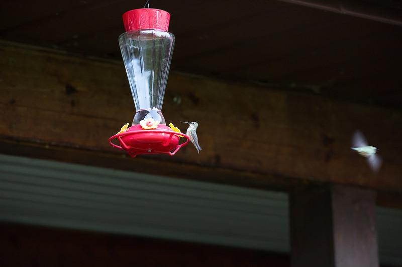 humming bird (55 of 55).jpg