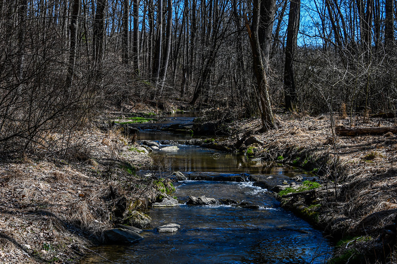 The Creek in Early Spring