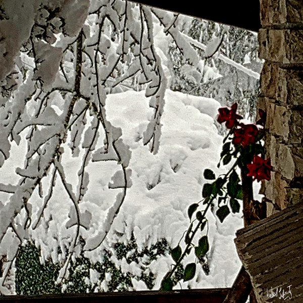 flowers in the snowy morning