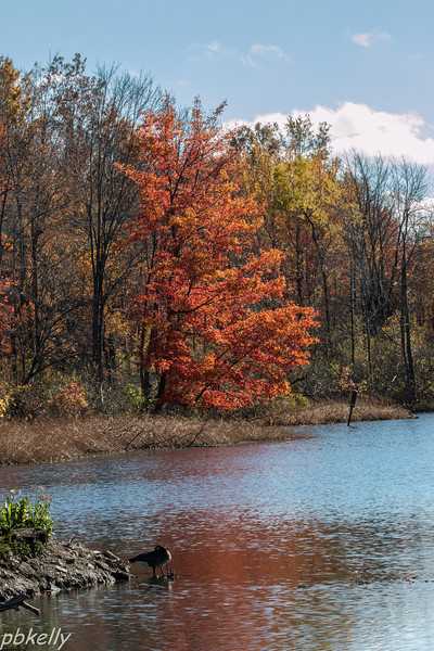 11-03.  North Chagrin.  Striking Fall foliage.