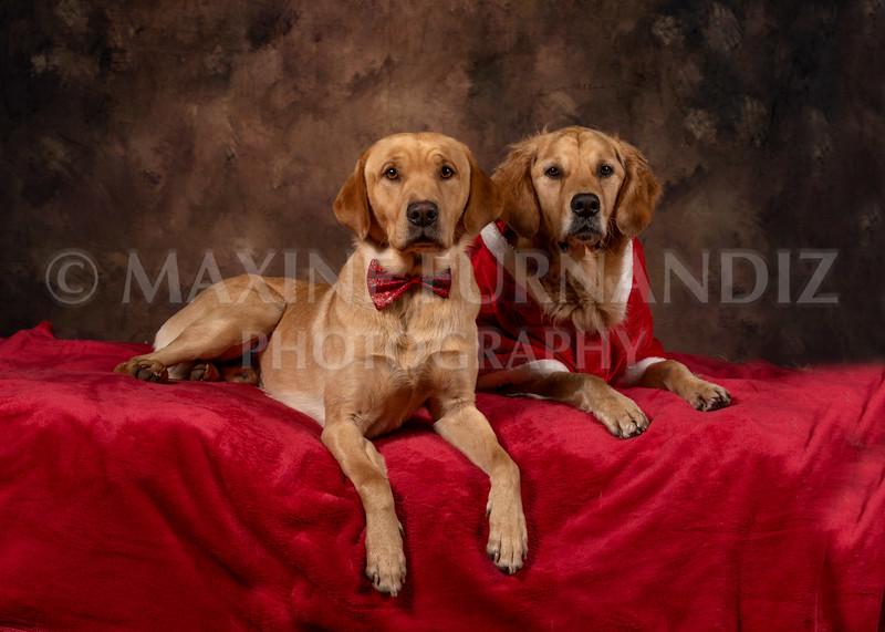 Dogs-4615-Edit.jpg