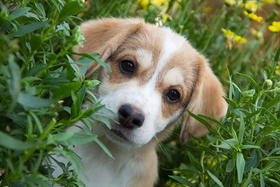 tuuli's puppy pictures