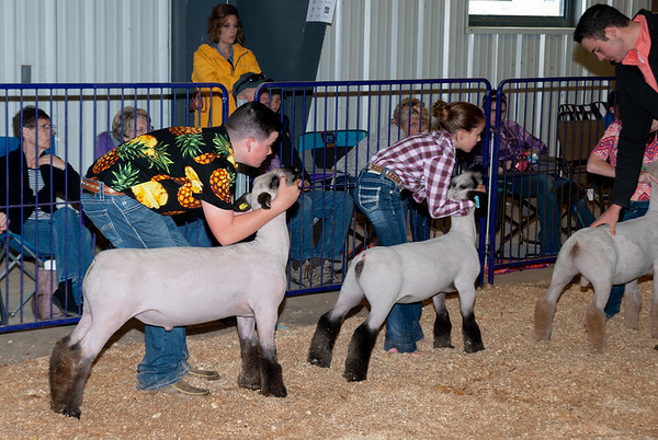 2019 Wildcat Showdown Sheep