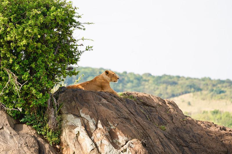 safari-2018-100.jpg