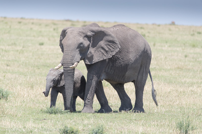 Africa - 101416 - 3320.jpg