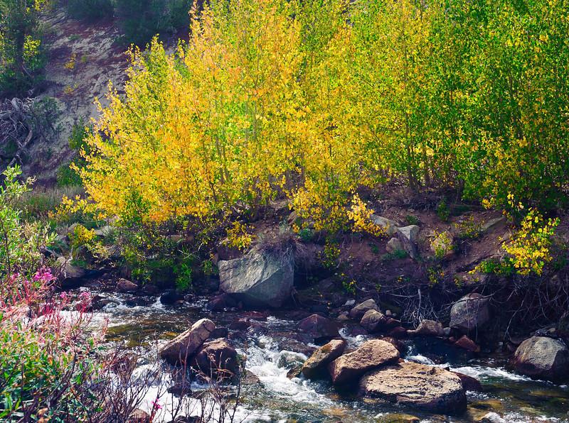 Creek in Autumn.jpg