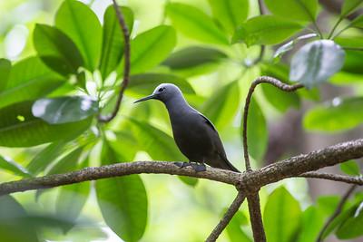 Fugler fra Seychellene