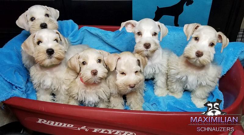 Bianca Pups 009.jpg