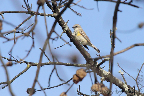 Birding 2017 April