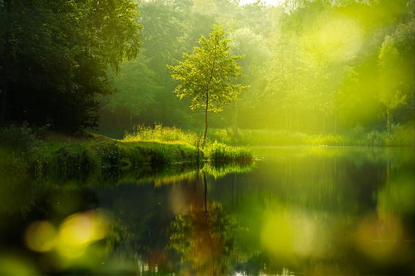 Fine Art natuur foto van een boom alleen omringd door een dromerig groen landschap van water en bos.