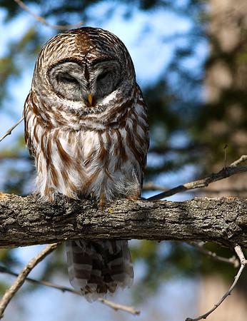 2013 Lake Elmo Owls