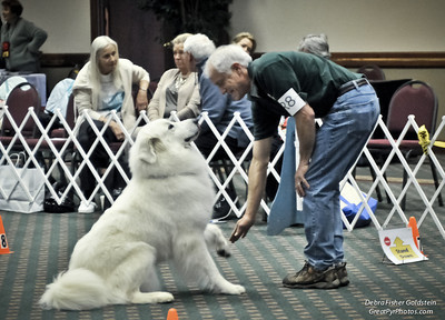 e-CD Gallery 12 - Obedience, Rally & Awards