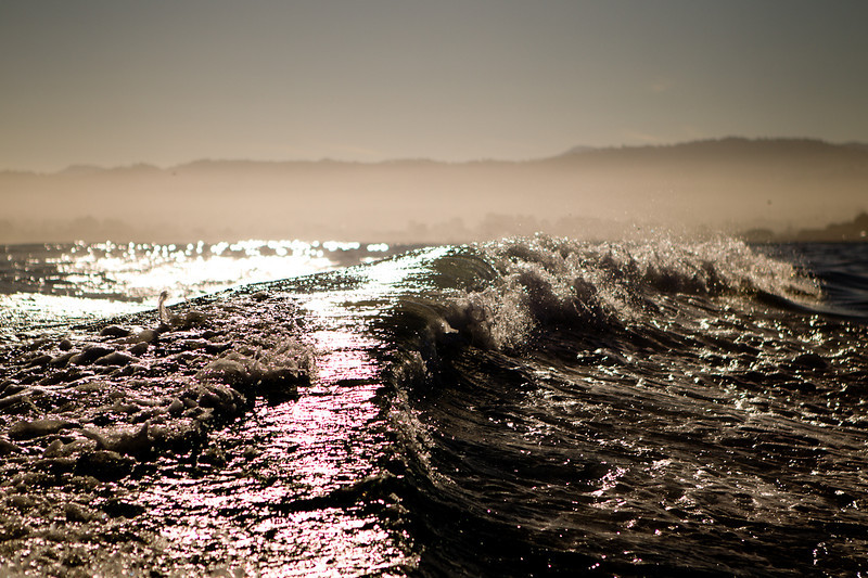 01-05-12_Monterey_Boat_Dive_Roeder_18.jpg