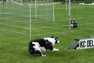 2014-09-21_KCDelft_Flyball
