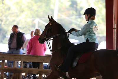 22) Academy W/T/C Equitation all ages