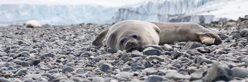 2019_01_Antarktis_01545.jpg