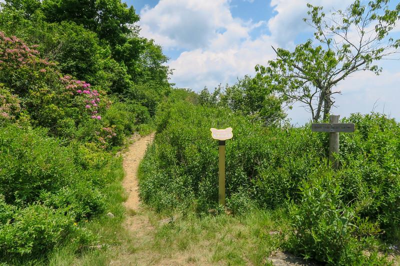 Graveyard Ridge-Greasy Cove Trail Junction -- 5,650'