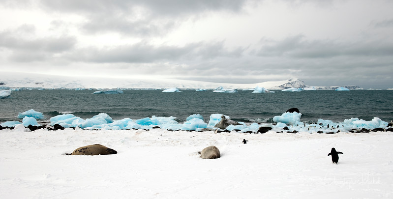 091204_penguin_island_8393.jpg