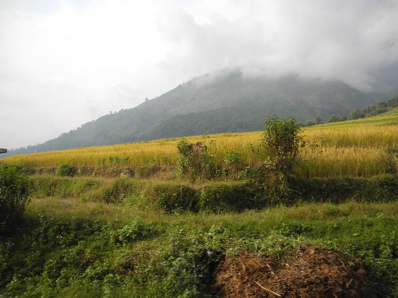 india2011 533.jpg