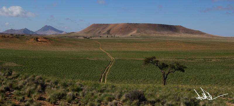 Namib after rain-2.jpg